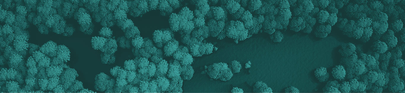 Top down view of a forest